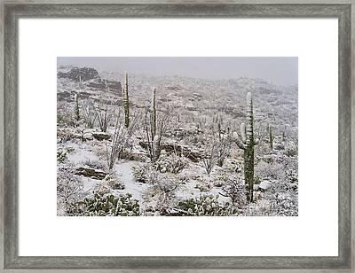 Winter In The Desert Framed Print by Sandra Bronstein