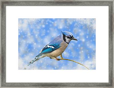 Winter Jay Framed Print by Geraldine DeBoer