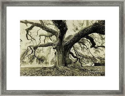 Winter Oak Framed Print by Scott Pellegrin