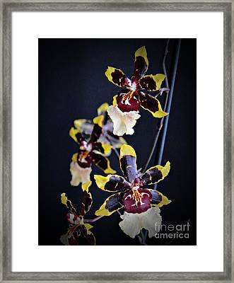 Winter Oncidium Orchid Framed Print by Chalet Roome-Rigdon