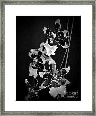 Winter Oncidium Orchid Monochrome Framed Print by Chalet Roome-Rigdon