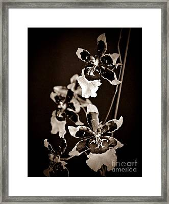 Winter Oncidium Orchid Sepia Framed Print by Chalet Roome-Rigdon