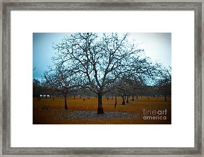 Winter Orchard Framed Print by Derek Selander