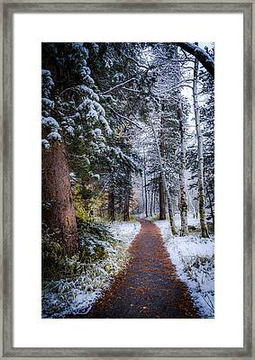 Winter Path Framed Print by Cat Connor