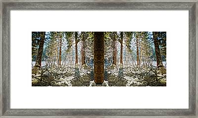 Winter Sun Shinning Through Trees Reflection Framed Print by Pelo Blanco Photo