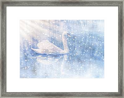Winter Swan Framed Print by Geraldine DeBoer