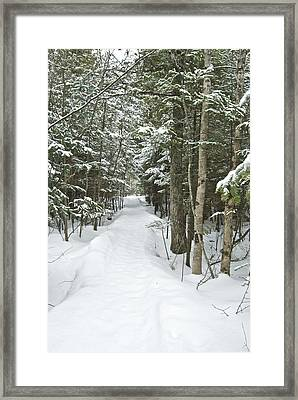 Winter Trail 2200 Framed Print by Michael Peychich