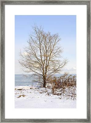 Winter Tree On Shore Framed Print by Elena Elisseeva