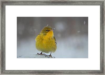 Winter Wonder Framed Print by Karen Cook