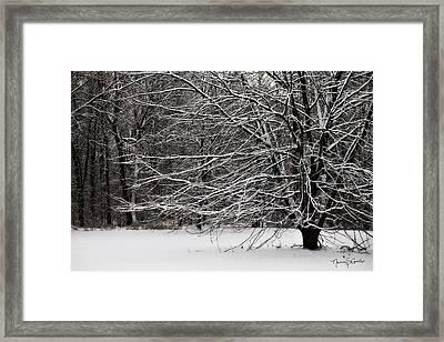 Winter Wonderland Framed Print by Nancy  Coelho