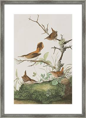 Winter Wren Or Rock Wren Framed Print by John James Audubon