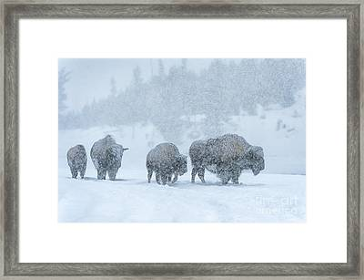 Winter's Burden Framed Print by Sandra Bronstein