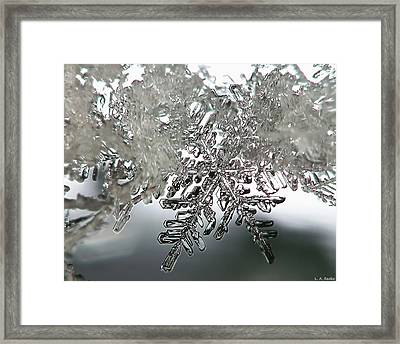 Winter's Glory Framed Print by Lauren Radke