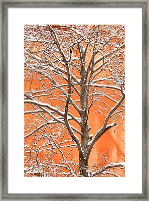 Winter's Touch Framed Print by Carl Amoth