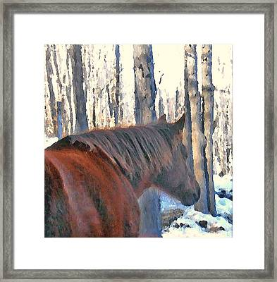 Wintertime Moments With The Paso Fino Mare Framed Print by Patricia Keller