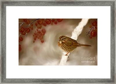 Wintertime Sparrow Framed Print by Beve Brown-Clark Photography