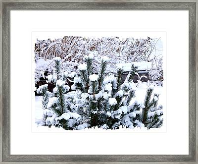 Wintry Tranquility Framed Print by Will Borden