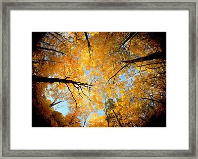 Wisconsin Canopy Framed Print by Todd Klassy