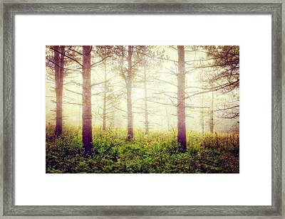 Wisconsin Foggy Forest Framed Print by Jennifer Rondinelli Reilly