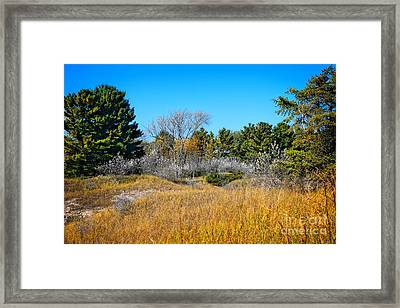 Wisconsin Kohler Andrae State Park Framed Print by Mary Machare