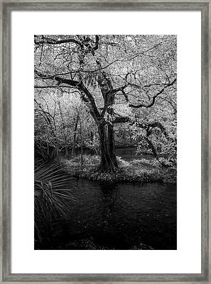 Wisdom Of A Tree Framed Print by Marvin Spates