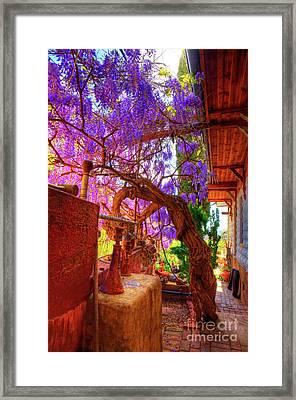 Wisteria Canopy In Bisbee Arizona Framed Print by Charlene Mitchell