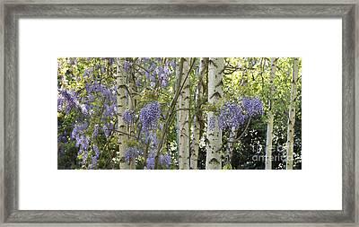 Wisteria Floribunda Panoramic Framed Print by Tim Gainey
