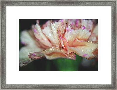 With A Faint Blush Framed Print by Laurie Search