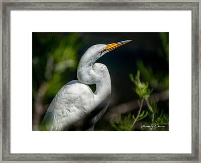 White Egret 2 Framed Print by Christopher Holmes