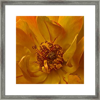 Within Framed Print by Patricia Stalter
