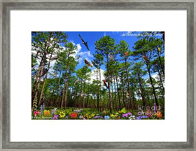 Withlacoochee State Forest Nature Collage Framed Print by Barbara Bowen