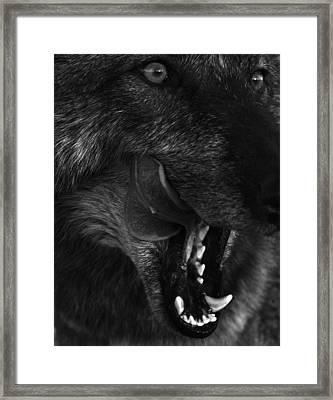 Wolf Close Up Framed Print by Dawn Kish