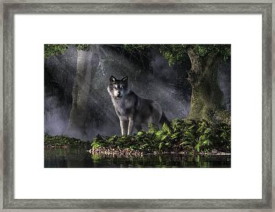 Wolf In The Forest Framed Print by Daniel Eskridge