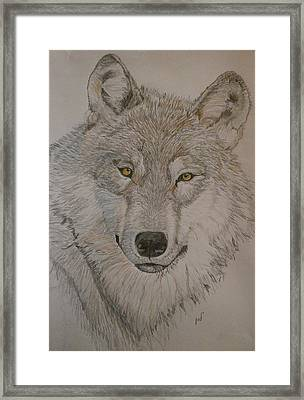 Wolf Framed Print by Maria Woithofer