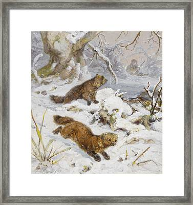 Wolverines In The Snow Framed Print by August Specht
