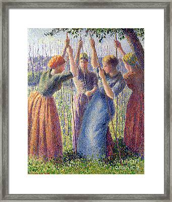 Women Planting Peasticks Framed Print by Camille Pissarro