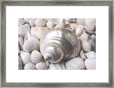 Wonderful White Seashells Framed Print by Garry Gay