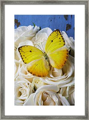 Wonderful Yellow Butterfly Framed Print by Garry Gay