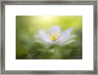 Wood Anemone Framed Print by Jacky Parker