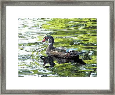 Wood Duck Framed Print by Al Powell Photography USA