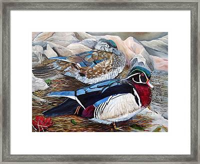 Wood Ducks  Framed Print by Marilyn  McNish