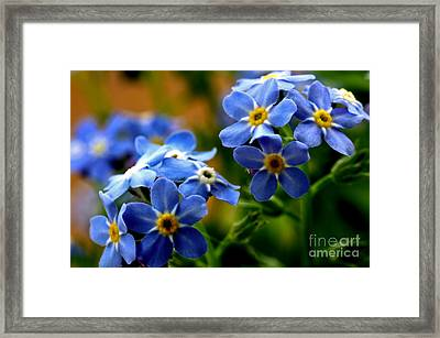 Wood Forget Me Not Blue Bunch Framed Print by Ryan Kelly