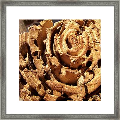 Wood Framed Print by Renata Vogl