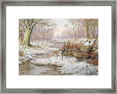 Woodcock Framed Print by Carl Donner