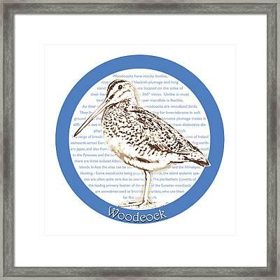 Woodcock Framed Print by Greg Joens