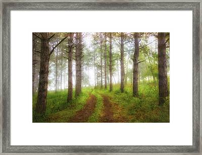 Wooded Trail  Framed Print by Jennifer Rondinelli Reilly