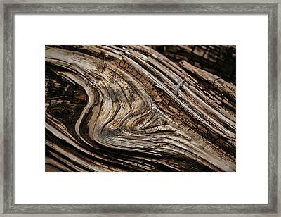 Woodgrain Framed Print by Bonnie Bruno