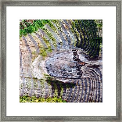 Woodgrain...crosscut Framed Print by Tom Druin