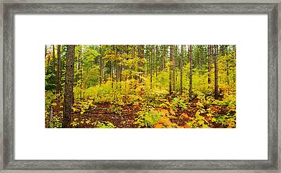 Woodland Panorama Framed Print by Michael Peychich