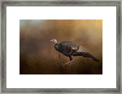 Woodland Walk - Wild Turkey Art Framed Print by Jai Johnson